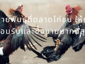 3 สายพันธุ์ที่ตลาดไก่ชน