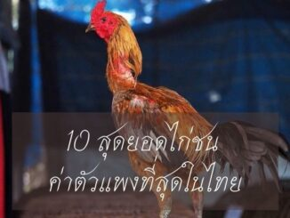 10 สุดยอดไก่ชน ค่าตัวแพงที่สุดในไทย