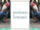 จุดเด่นของไก่ชนพม่า